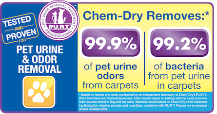 Ivy Green Chem-Dry removes 99.9% of pet urine odors from carpets and 99.2% of bacteria from pet urine in carpets in Corona CA